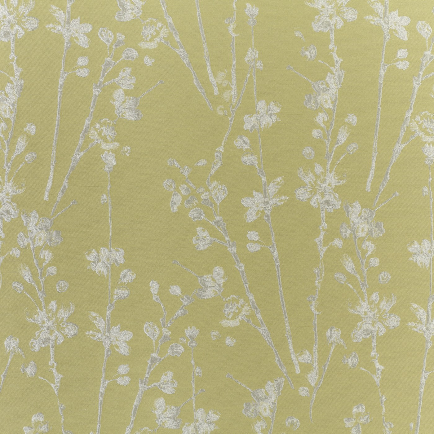 Meadow Willow